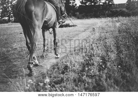 Rider on a horse on meadow stepping stick place for text, black and white photo