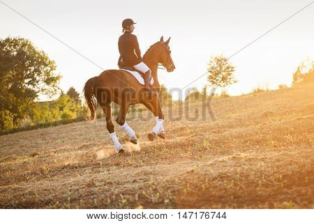 woman riding a horse in light of sunset. equitation,