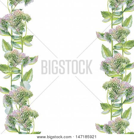 Wildflower livelong flower frame in a watercolor style isolated. Full name of the herb: Orpine, Sedum Telephium, hylotelephium. Aquarelle flower for background, texture, pattern, frame or border.