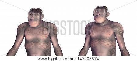 Computer generated 3D illustration with the Homo Habilis isolated on white background. Homo Habilis is an extinct species of the genus Homo.