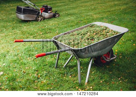 wheelbarrow with grass and lawnmower on green lawn