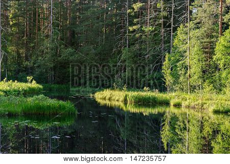 A small forest lake with swampy shores in the summer sunny day.