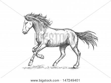 Prancing horse with stomping hoof. Sketch portrait of mustang with running gait and waving mane and tail