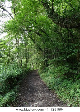 Pathway through forest landscape photographed at Colby Woodland Garden near Amroth in Pembrokeshire