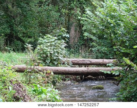 Log bridges across river and forest landscape photographed at Colby Woodland Garden near Amroth in Pembrokeshire