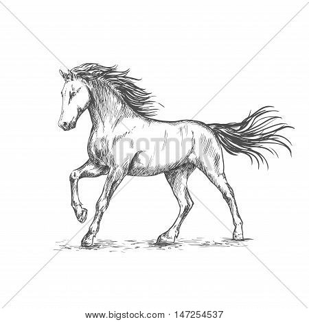 White horse with stamping hoof pencil sketch portrait. Prancing mustang with mane and tail waving by wind