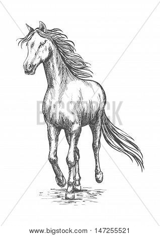 Running white horse pencil sketch. Vector galloping mustang stallion rushing against wind