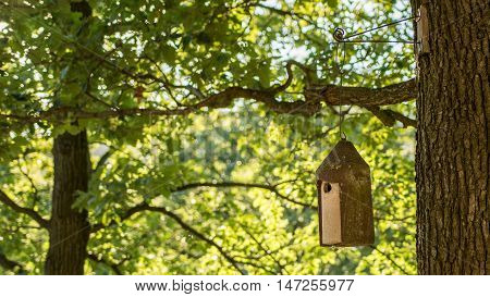Outdoor birdhouse on tree in green forest