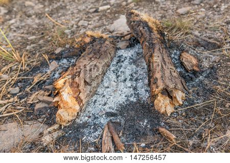 Ash around burned down campfire in nature