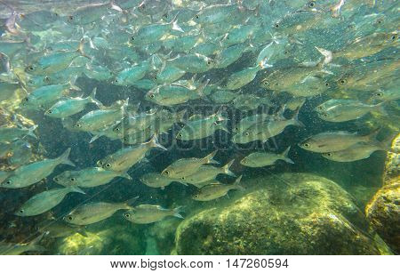 Underwater Scene Hawaii