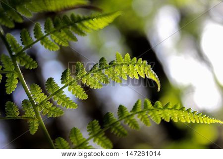 Closeup of a vibrant fern frond with a blurred background