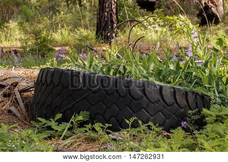 Old discarded tire overgrown with weeds in the forest