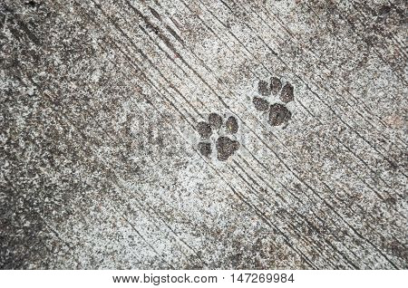 The Footprint Of Dog On The Concrete Rough Floor Or Ground