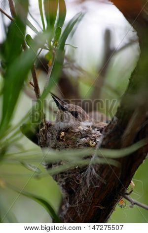 Humming Bird..