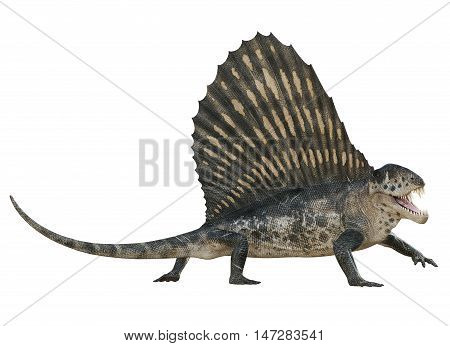 3D rendering of Dimetrodon on the move, isolated on white background.
