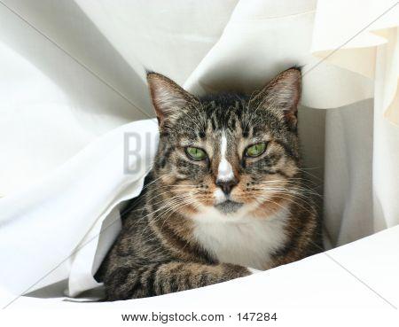 Cat In White