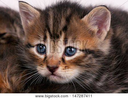 Portrait of cute little kitten with sad eyes over white background close-up