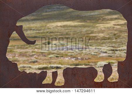 Musk ox silhouette. Dovrefjell-Sunndalsfjella National Park. Norway. Horizontal