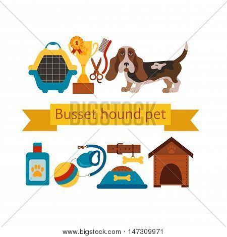 basset hound dog infografic with dog care isolated elements. basset hound dog training  poster vector illustration. Colorful basset hound dog infografic concept. Puppy basset hound dog care concept