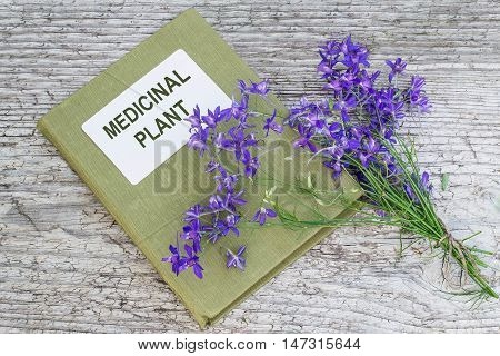 Medicinal plant Consolida regalis (Forking Larkspur Rocket-larkspur Field larkspur) and herbalist handbook on old wooden table. It is used in herbal medicine good honey plant