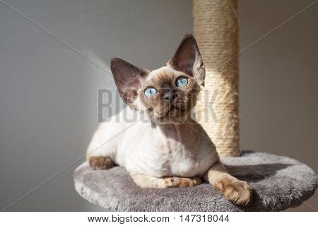 Beautiful kitten is sitting on the scratching post and enjoying the warmth of sunlight. Cat is sitting near the window. Cat looking in to the camera. Curious expression. Pet Equipment, Accessories and supplies
