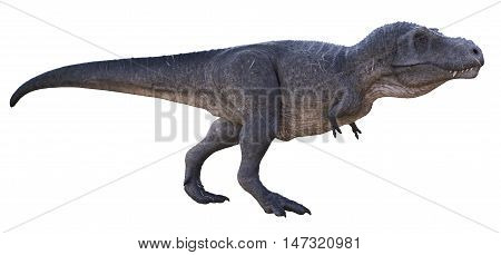 3D rendering of Tyrannosaurus Rex walking, isolated on white background.