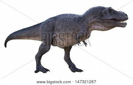 3D rendering of Tyrannosaurus Rex looking for food, isolated on white background.