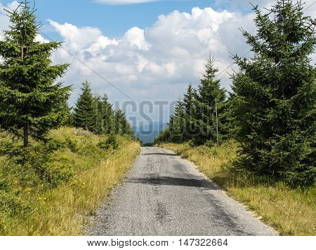 Mountain road or path through young forest in Orlicke mountains, central Europe, countryside traveling hiking walking, with bottom center copyspace