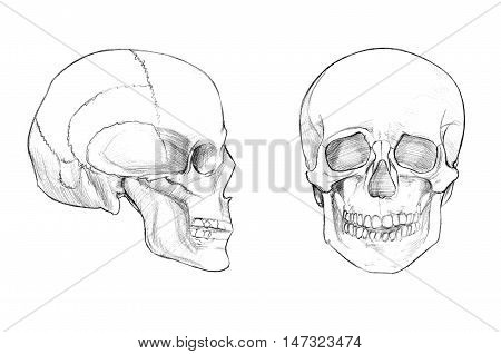 Hand drawn medical illustration drawing with imitation of lithography: Skull (face and profile)