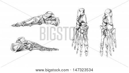 Hand drawn medical illustration drawing with imitation of lithography: Bones of foot