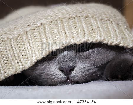 The Cat Hid In A Warm Sweater