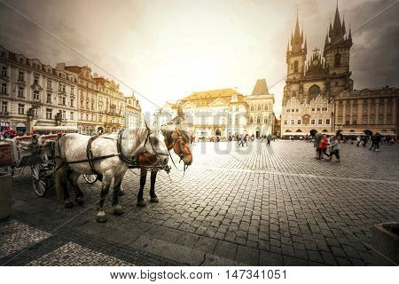 Team of horses in Old Town with Tyn Church Prague.