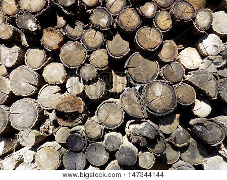 Woodpile texture, pile of wood logs after wood exploitation background
