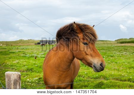 Free horse in the meadow
