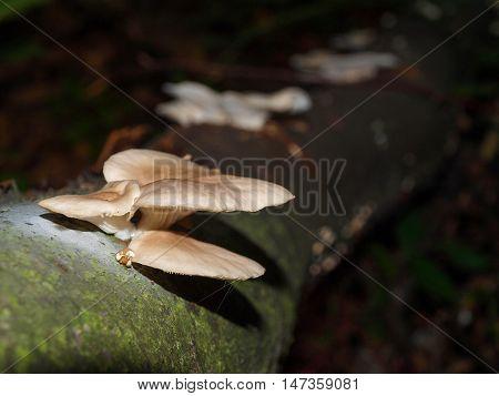 Mushrooms grew on the damp mossy fallen tree trunk