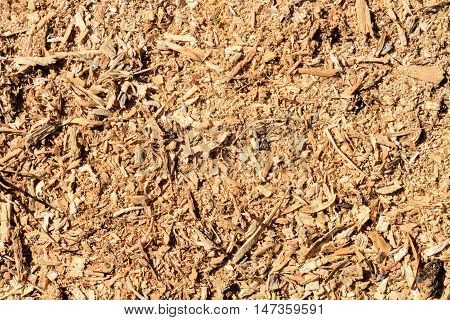 Sawdust of wood on floor with texture