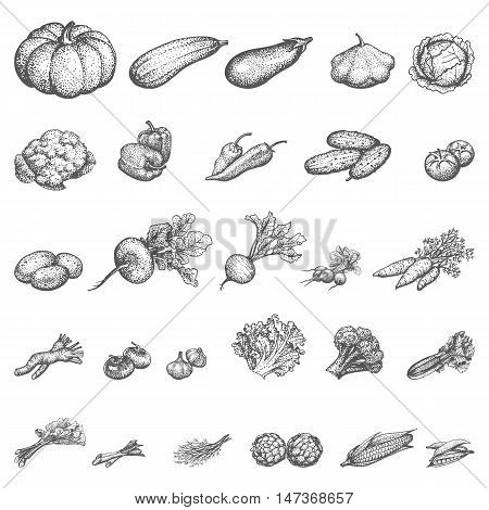 Vector illustration sketch doodle hand-drawn set of vegetables. Isolated on white background. The concept of a vegetable shop and harvesting. Vintage style.