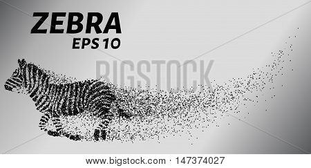 Zebra, particle divergent composition, vector illustration. Silhouette of a zebra from particles.