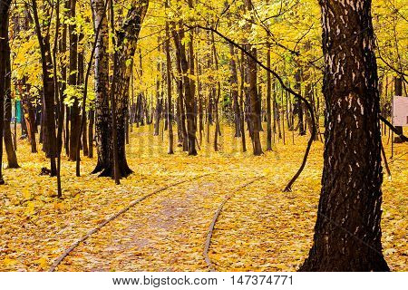 forest Sunny autumn, a carpet of yellow leaves