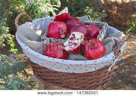 Basket Of Pomegranates