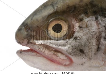 real macro of fish head isolated on white poster
