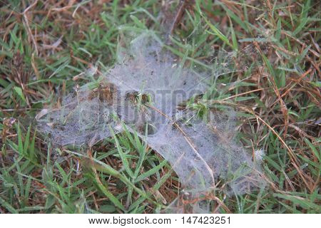 Cobweb and spider on the grass in soft focus.