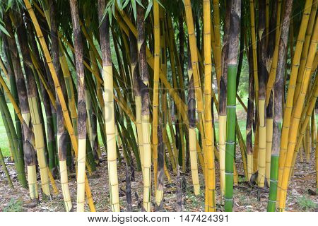 Decorative bamboo ideal background photo display purposes