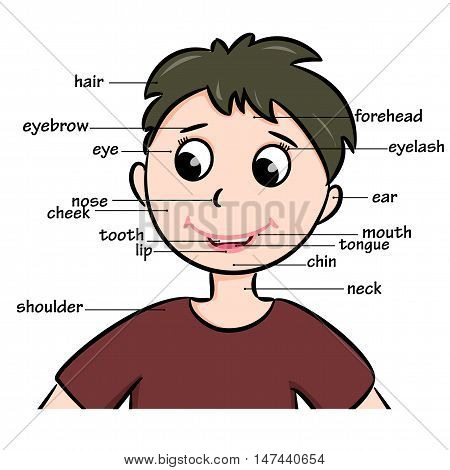 Cartoon childl. Vocabulary of body parts. Vector illustration