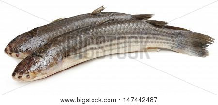 Close up of Bangladeshi local fish over white background