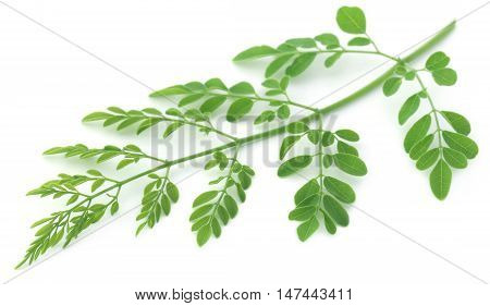 Close up of Edible moringa leaves over white background