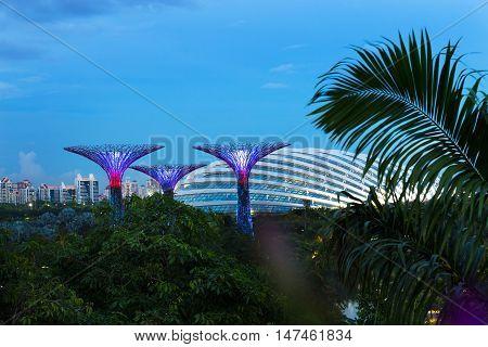 Singapore Supertree At Gardens By The Marina Bay