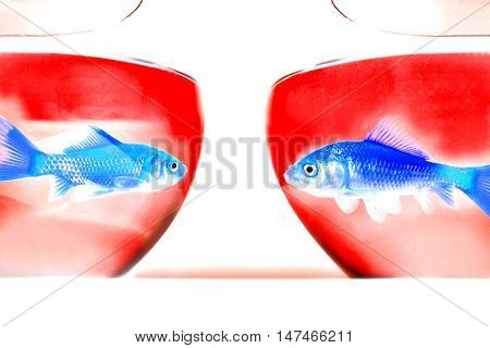 two goldfish looking at each other