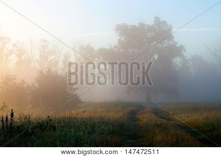 Early Foggy Morning