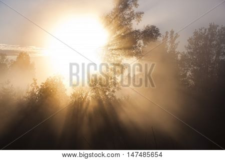 Rays Of The Rising Sun